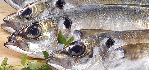 categorias-peixe